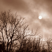 8X10 Winter Sunset Photo, Sepia Photography, Winter Solstice, Tree Silhouette, Surreal Fog photo, Eerie, Monochrome Print