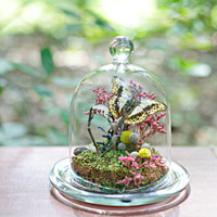 Butterfly Glass Dome, Small Terrarium Kit, Butterfly Specimen, Woodland Miniature Scene, Gardener and Naturalist, Nature Lover, Outdoor