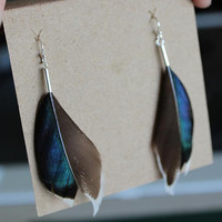 Real Feather Earrings  Mallard Duck Feather   by TheBeetleWing