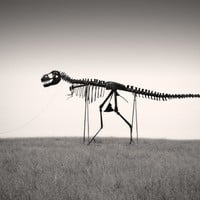 Man&#x27;s Best Friend Dinosaur Skeleton Photo 6 x 9 Fine by ndtphoto