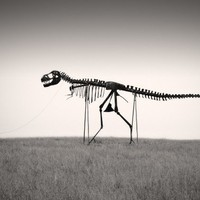 Man's Best Friend Dinosaur Skeleton Photo 6 x 9 Fine by ndtphoto