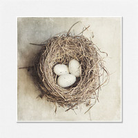 Bird Nest Photograph White Eggs Brown Nest by LisaRussoFineArt