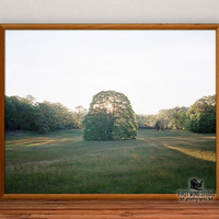 Giant Tree Photography, sunset photo print, fine art, horizontal wall art, field wall decor, home decor, 8x10, 11x14, 12x15, 16x20