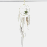Living Dreamcatcher