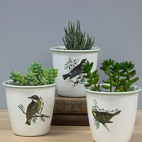Peep On Chirping On! Herb Pot Set