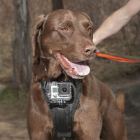 | New Products for Dogs this Season | New for Dogs | New for Dogs | Dogs - Orvis Mobile