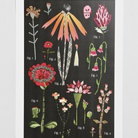 Susan Farrington Botanical Series, Red Variations Art Print - Urban Outfitters