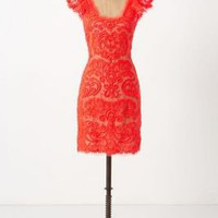 Sunblaze Lace Dress - Anthropologie.com