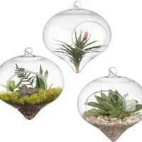 hanging glass terrarium in vases | CB2