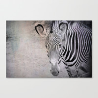 zebra Stretched Canvas by Marianna Tankelevich