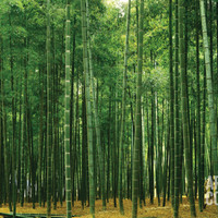Bamboo Plantation Huge Wall Mural Poster Print Wall Mural at Art.com