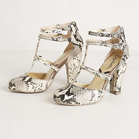 Snake Charmer Pumps by Seychelles Black & White 7.5 Heels