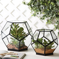 Geodesic Terrariums - Set of 2