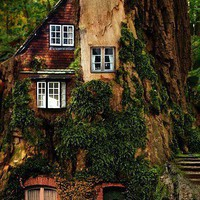Sleeping Beauty Cottage Made From an Old Tree Trunk