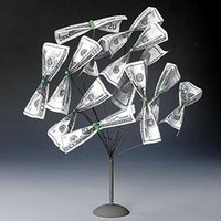 Money Tree @ Harriet Carter
