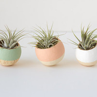 3 Air Plant Bell Cups, Choose Your Color, Perfect gift, modern home decor, wedding favors, stocking stuffer