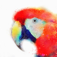 The Articulate - Parrot Art Print by Jacqueline Maldonado | Society6