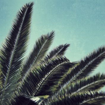 Palms Art Print by RichCaspian | Society6