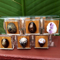 Hawaiian Shell Shower Curtain Hooks OOAK