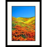 Great American Picture California Poppies Framed Photograph - Stuart Westmorland - IS323083 - All Wall Art - Wall Art & Coverings - Decor