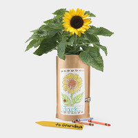 Kids Sunflower Garden in a Bag