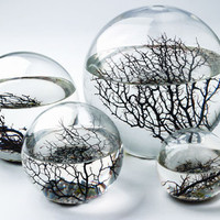 Ecosphere - The Inhabitat Shop