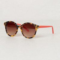 Windward Tort Sunglasses