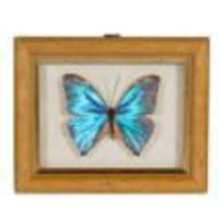 One Kings Lane - Flynn Kuhnert & Peter Iacono - Framed Butterflies, Set of 3