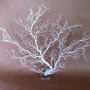 White Sea Fan on Base Beach Nautical Decor by nakhome on Etsy