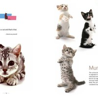 Kittens in 3-D Hardcover – June 21, 2011