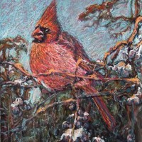Cardinal Bird Original Artwork in oil pastel by Alexandra Cook