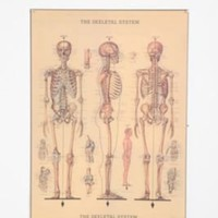 UrbanOutfitters.com &gt; Skeleton Poster