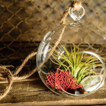 Hinterland Trading Christmas Red Coral Air Plant Terrarium Kit with Sand Dollar Gift Boxed