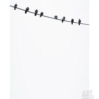 Birds on a Wire Photographic Print by Lars Hallstrom at Art.com