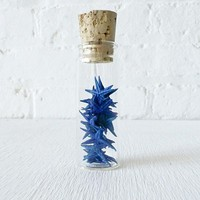 20 Blue Starfish Specimens in Glass Cork Vial by EarthSeaWarrior