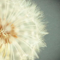 Dandelion Art - Flower Picture - Dandelion Photograph - Nursery Decor - Teal, Cream, Blue, Aqua, Whi | Luulla