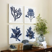 FRAMED CORAL PRINTS - INDIGO