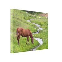 """My Favorite"" Stretched Canvas Print"