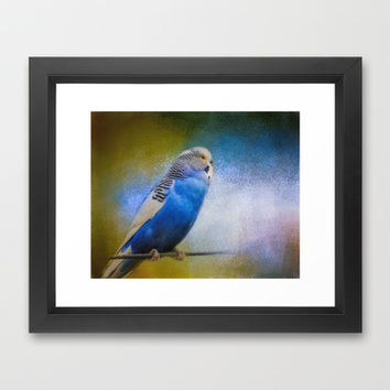 The Budgie Collection - Budgie 2 Framed Art Print by Jai Johnson