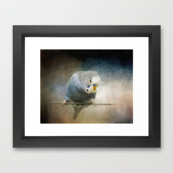 The Budgie Collection - Budgie 3 Framed Art Print by Jai Johnson