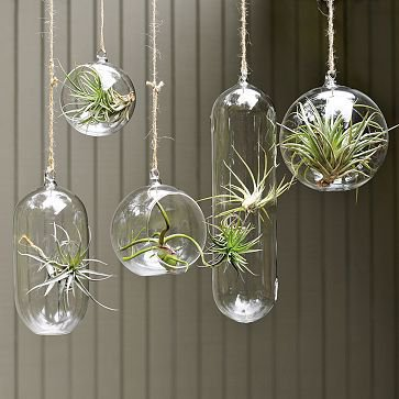 Hanging Garden Glass Bubble Collection | west elm