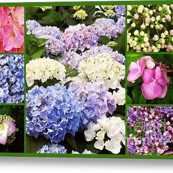 Hydrangea Flowers Collage Acrylic Print
