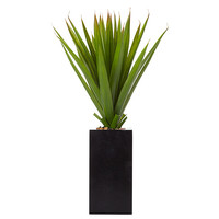 Aloe In Tall Rectangular Pot – Target Australia