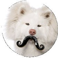 Humunga Stache - for your furkids!