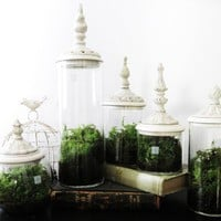 Apothecary Terrarium
