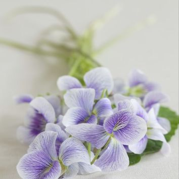 candied wild violets-A Little Zaftig