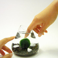 Marimo Pet in the Black Sea by wendiland on Etsy
