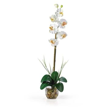 SheilaShrubs.com: Cream Single Phalaenopsis Liquid Illusion Silk Flower Arrangement 1104-CR by Nearly Natural : Artificial Flowers & Plants