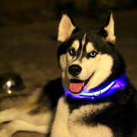 HALO LED PET COLLAR