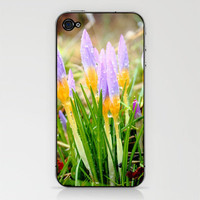 Crocus rain iPhone & iPod Skin by John Dunbar | Society6